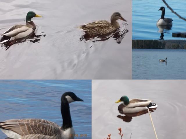 linnut.jpg