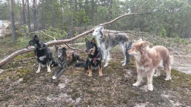 Rpuh-omat-koirat-rivissa.jpg