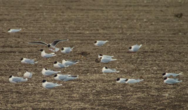 linnut%20pellolla-2.jpg