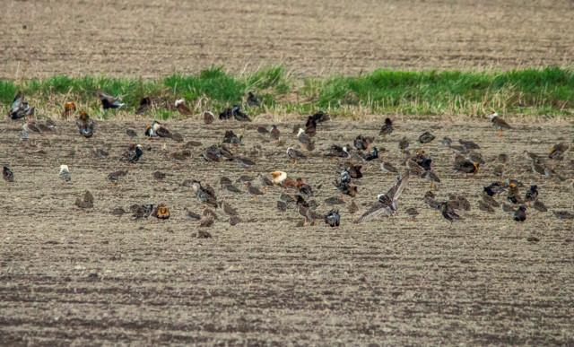 linnut%20pellolla-3.jpg