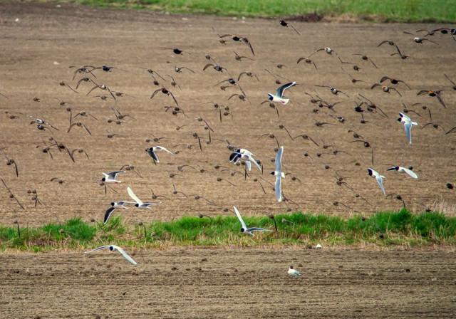 linnut%20pellolla-5.jpg