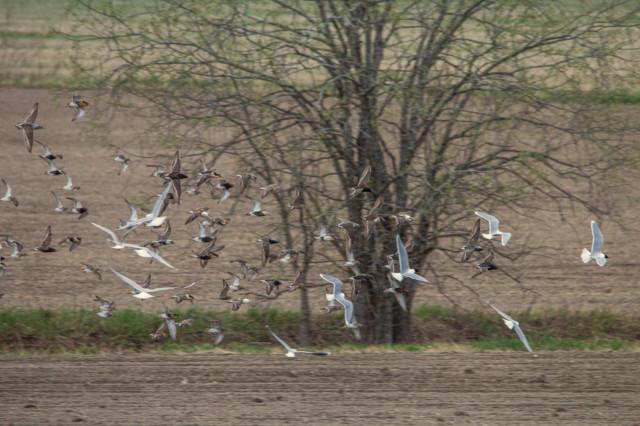 linnut%20pellolla-6.jpg