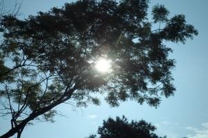 tree-in-the-sun-1431319-m.jpg