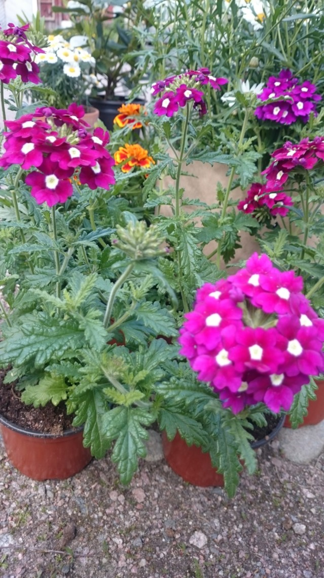 kukka2.jpg