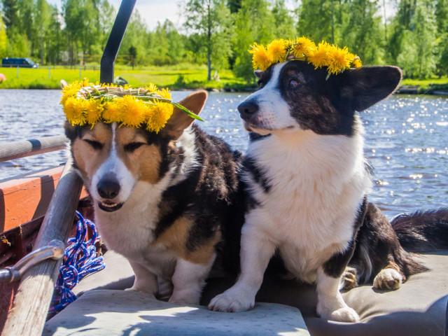 kukkaispojat.jpg