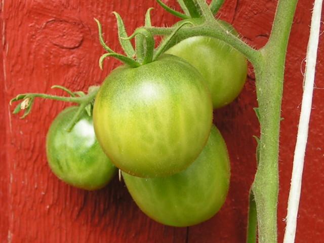tomaatti.jpg?1435053291