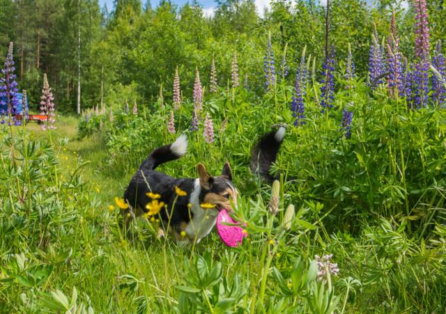 lupiinifrisbee-9.jpg