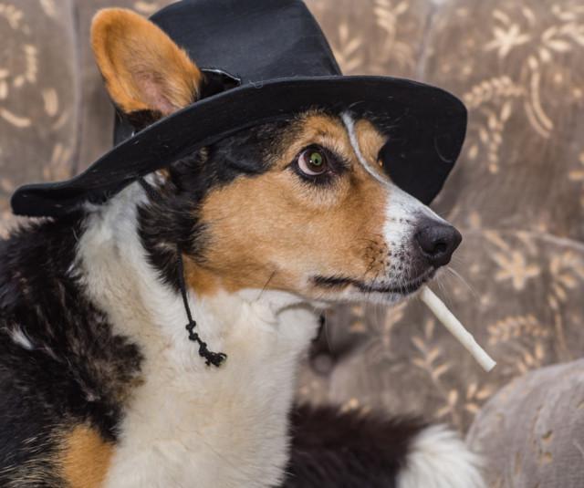 Pietu-cowboy.jpg