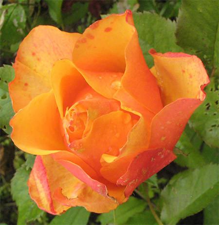 oranssi.jpg