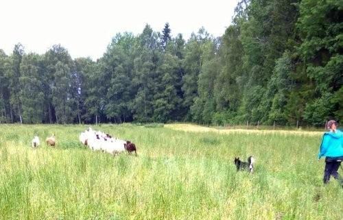 Heksu-lammas3.jpg