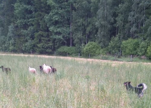 Heksu-lammas2.jpg