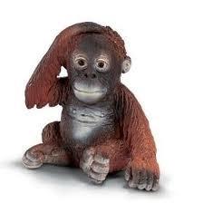 orangutangin%20poikanen%2014307.jpg