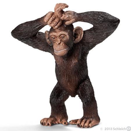 simpanssi%2C%20nuori%2C%20seisova%201468