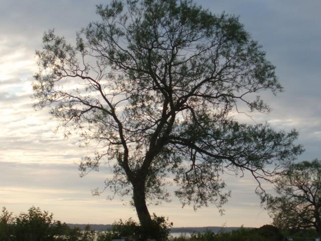Mariestad%20006.jpg