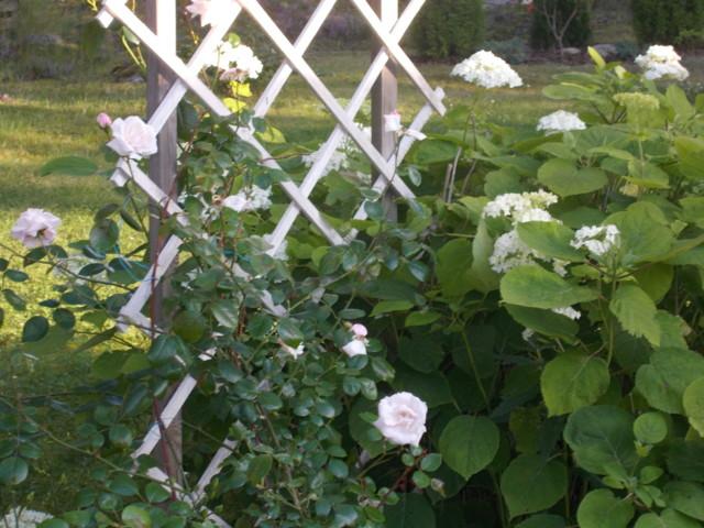 Kukkia%20001.jpg
