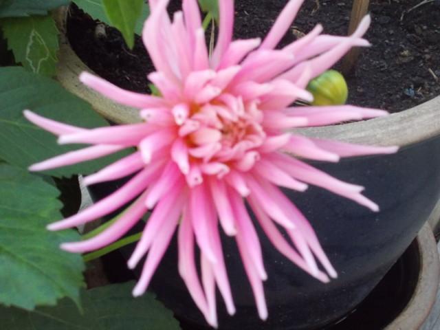Kukkia%20005.jpg
