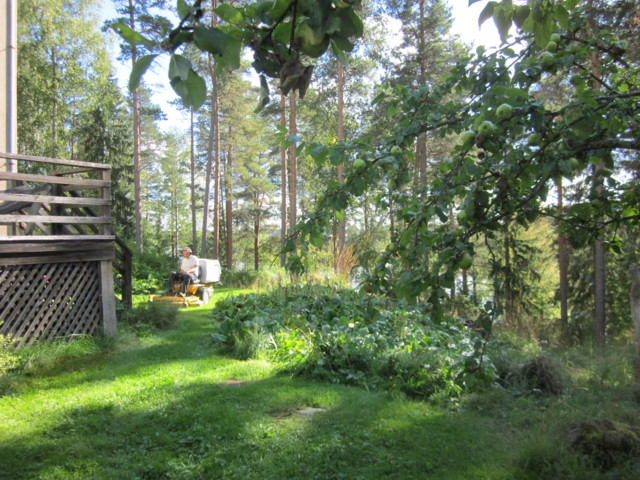 Perhosia%20002.jpg