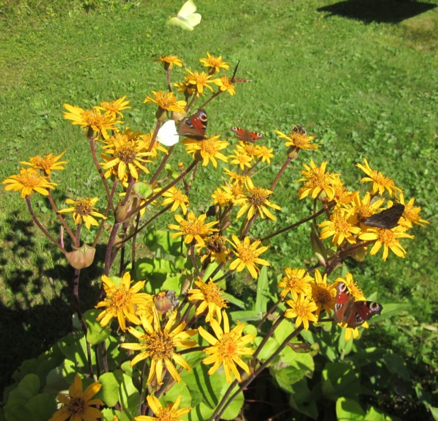 Perhosia%20004.jpg
