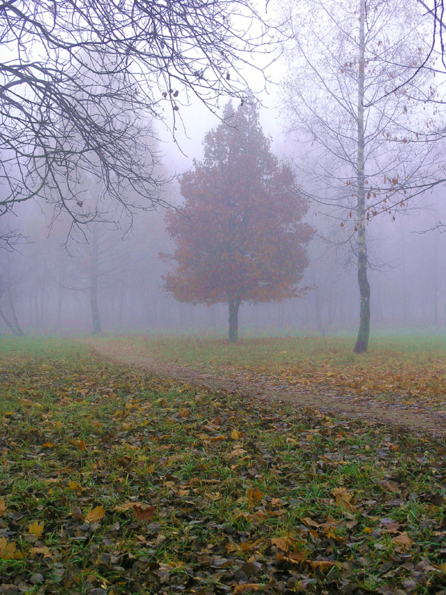 fog-1388970.jpg