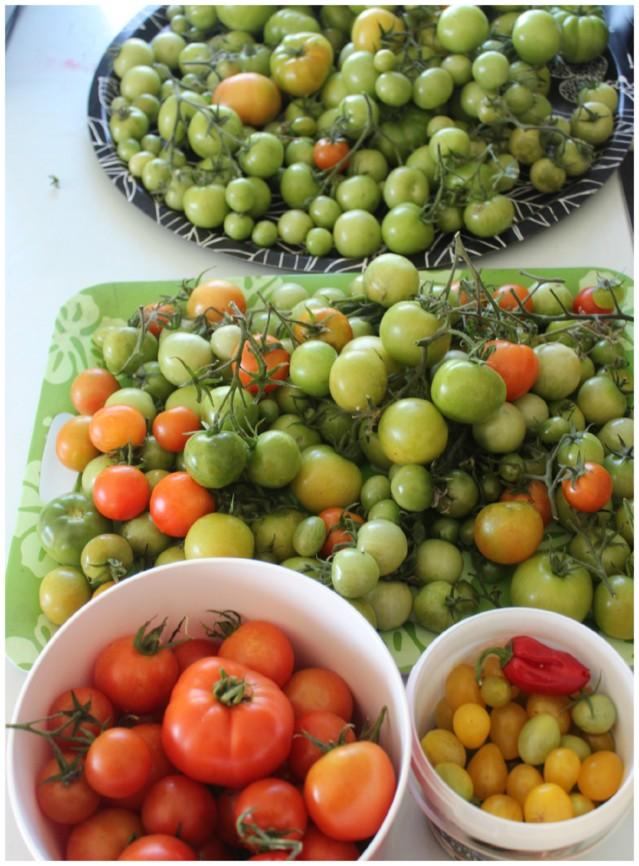 tomaatti%203.jpg