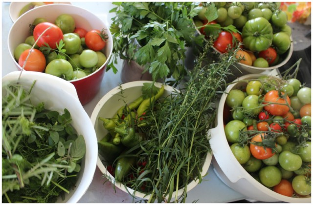 tomaatti2%2C4.jpg