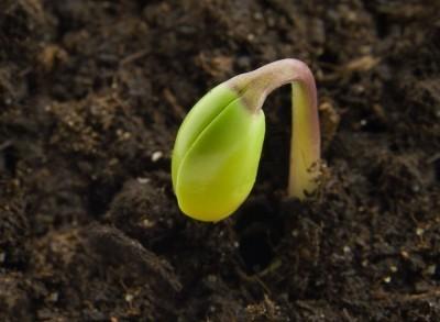 new%20budding%20plant.jpg
