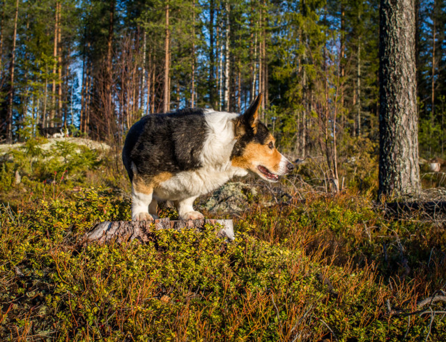 Marrasmarjassa-5.jpg