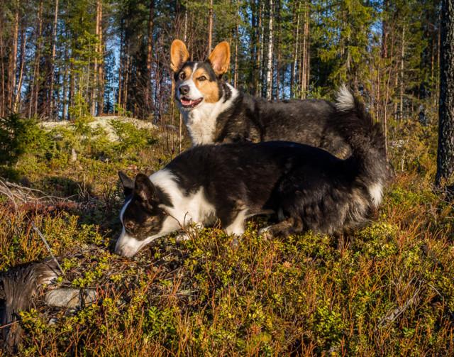 Marrasmarjassa-6.jpg