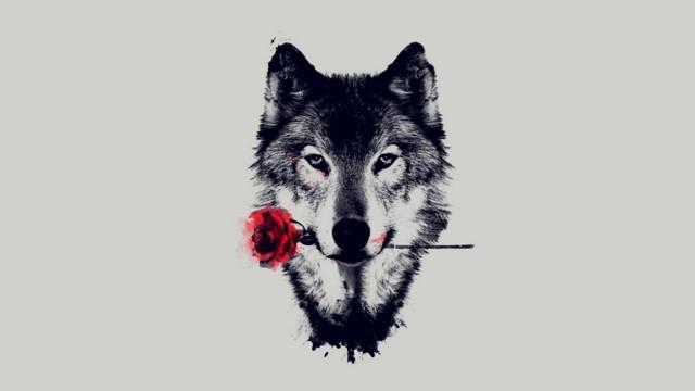 wolf_hd_by_arma3lonewolf-d8m9rto.jpg
