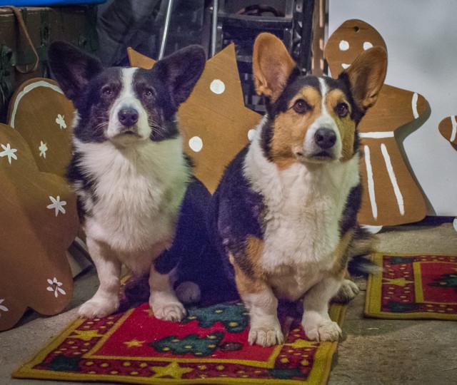 Joulukalenteria.jpg