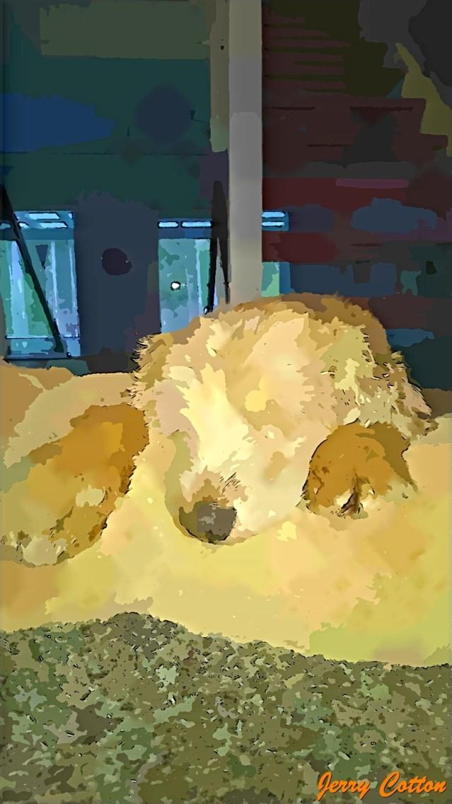Koiranunta.jpg