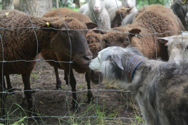 fauna-ja-lammas.jpg