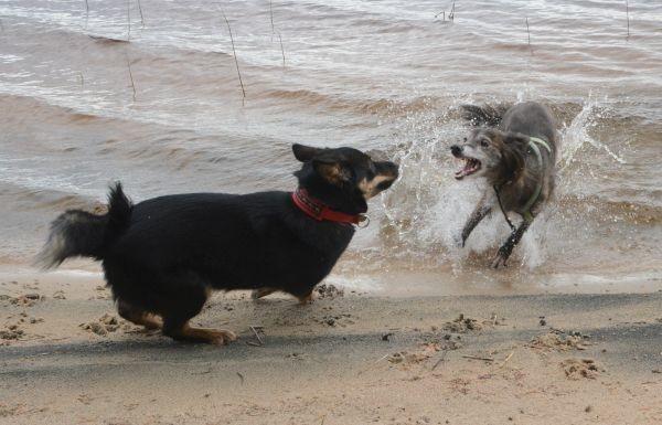 flora-heksu-leikkii-rannalla.jpg
