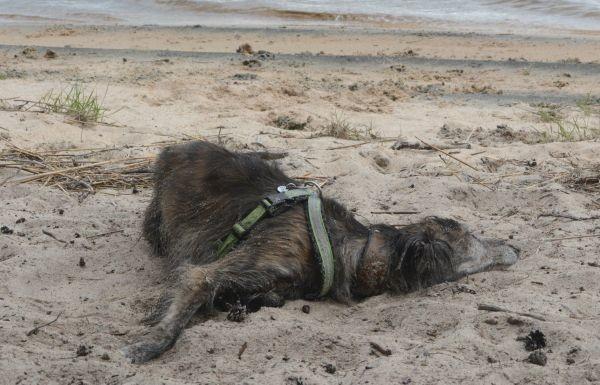 flora-makaa-hiekassa.jpg