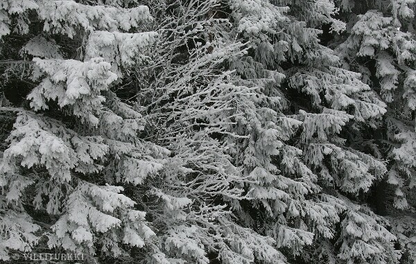 Lumi.Valmis.jpg