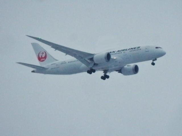 8%20Japan%20Airlines.jpg