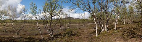 Muotkat_Panorama11.jpg