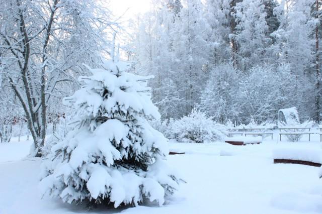 talvikuva.jpg
