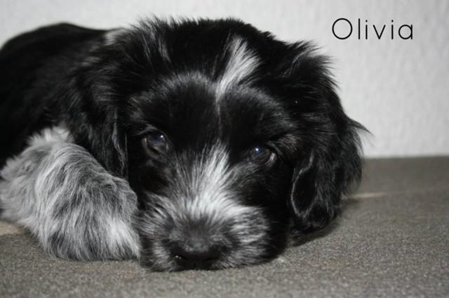 olivia2.jpg
