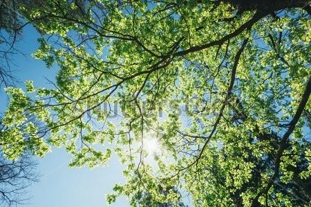 stock-photo-spring-summer-sun-shining-th