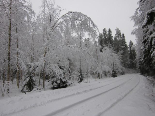 Lunta%20oksistossa%20008.jpg