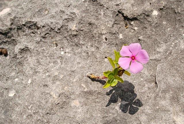 28773163.FlowerRock.jpg