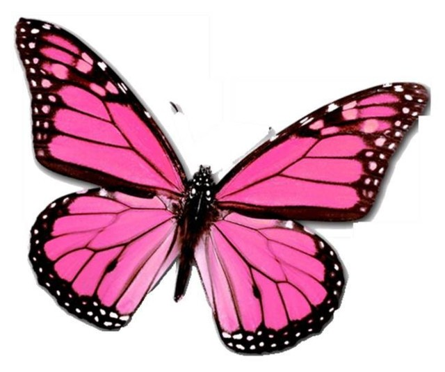 pink_butterfly_pictures_1280221839.jpg