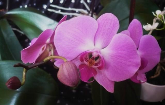 Orkideat%2014.2.-16%20012.jpg