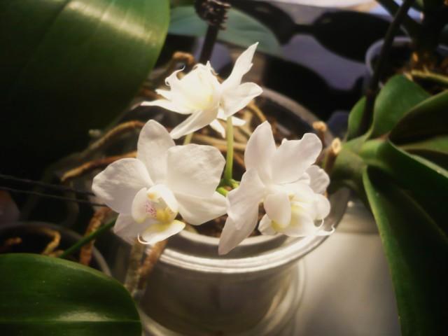 Orkidea%207.3.-16%20019.jpg