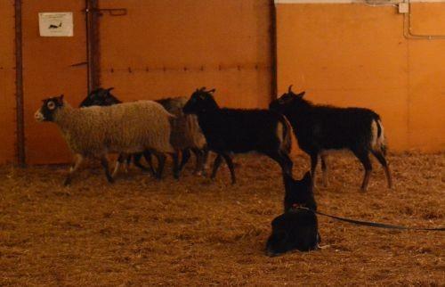 nila-lammas2.jpg