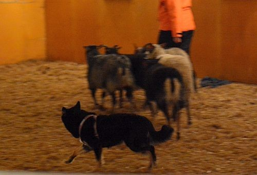 tyyne-lammas1.jpg