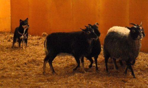 tyyne-lammas2.jpg