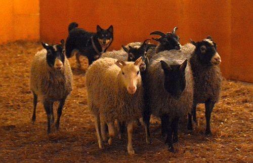 tyyne-lammas3.jpg