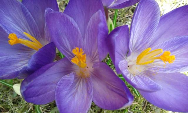 kukkii.jpg